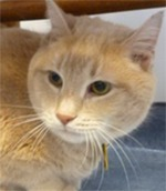 Aurora's Angels Fund helps cats in need at A Cat Clinic in Germantown/Boyds, MD