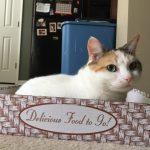 Grain-free cat foods are not always best!