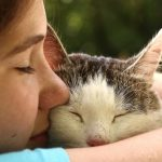 Feline Heartworm Disease can be fatal. Prevention is your best protection!