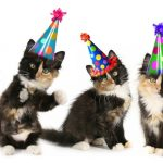 Happy birthday to A Cat Clinic!