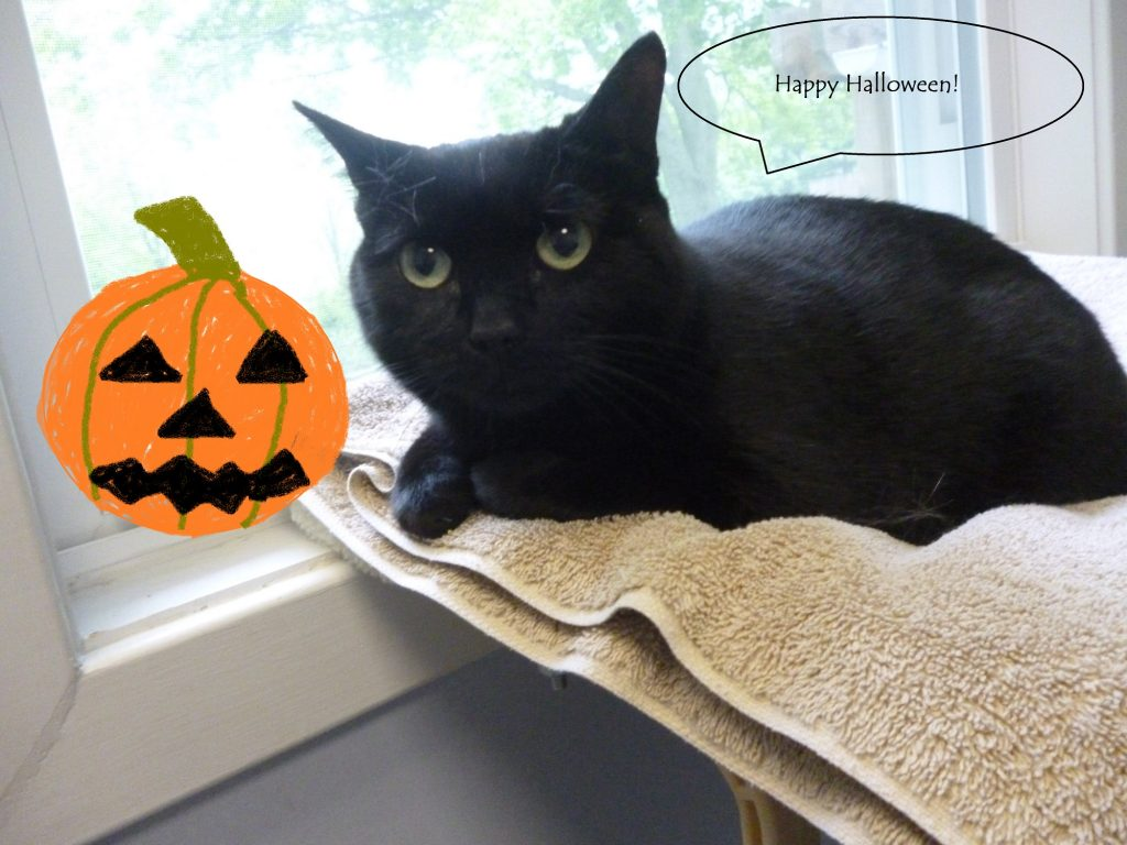 Black cats and Halloween: Good luck or cursed?