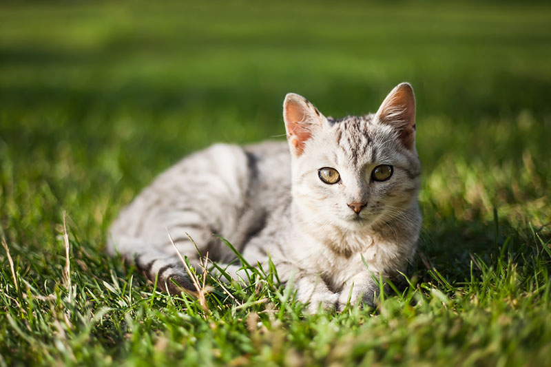 New tick control for cats: Bravecto topical is here!