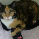 Aurora's Angels Fund helps cats in need