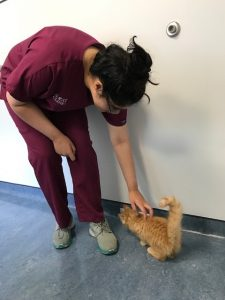 Summer Intern at A Cat Clinic, Germantown, MD