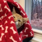 PJ's Story, benefciary of Aurora's Angels Fund donations at A Cat Clinic