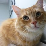 Pancreatitis is a servious disease in cats