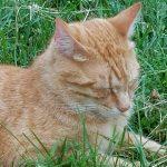 Can my cat wait? When is it an emergency? Part 2