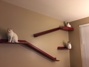 Cats destroying furniture: cat shelves may help