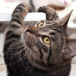 cats destroying furniture: how to stop