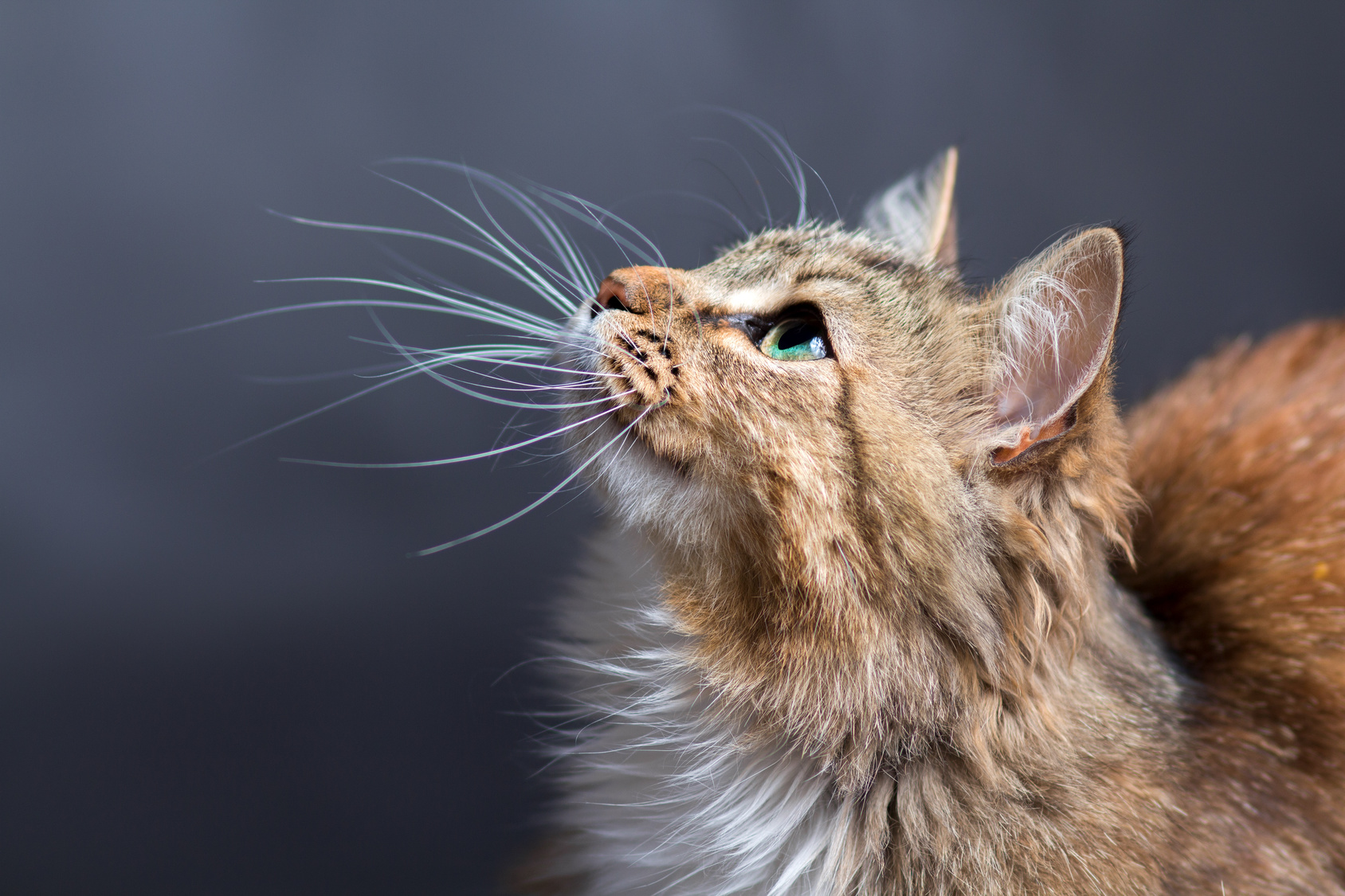 Cat behavioral issues can be frustrating but can be helped