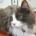 Top 5 Resources: Best cat health websites, from A Cat Clinic, Boyds, MD