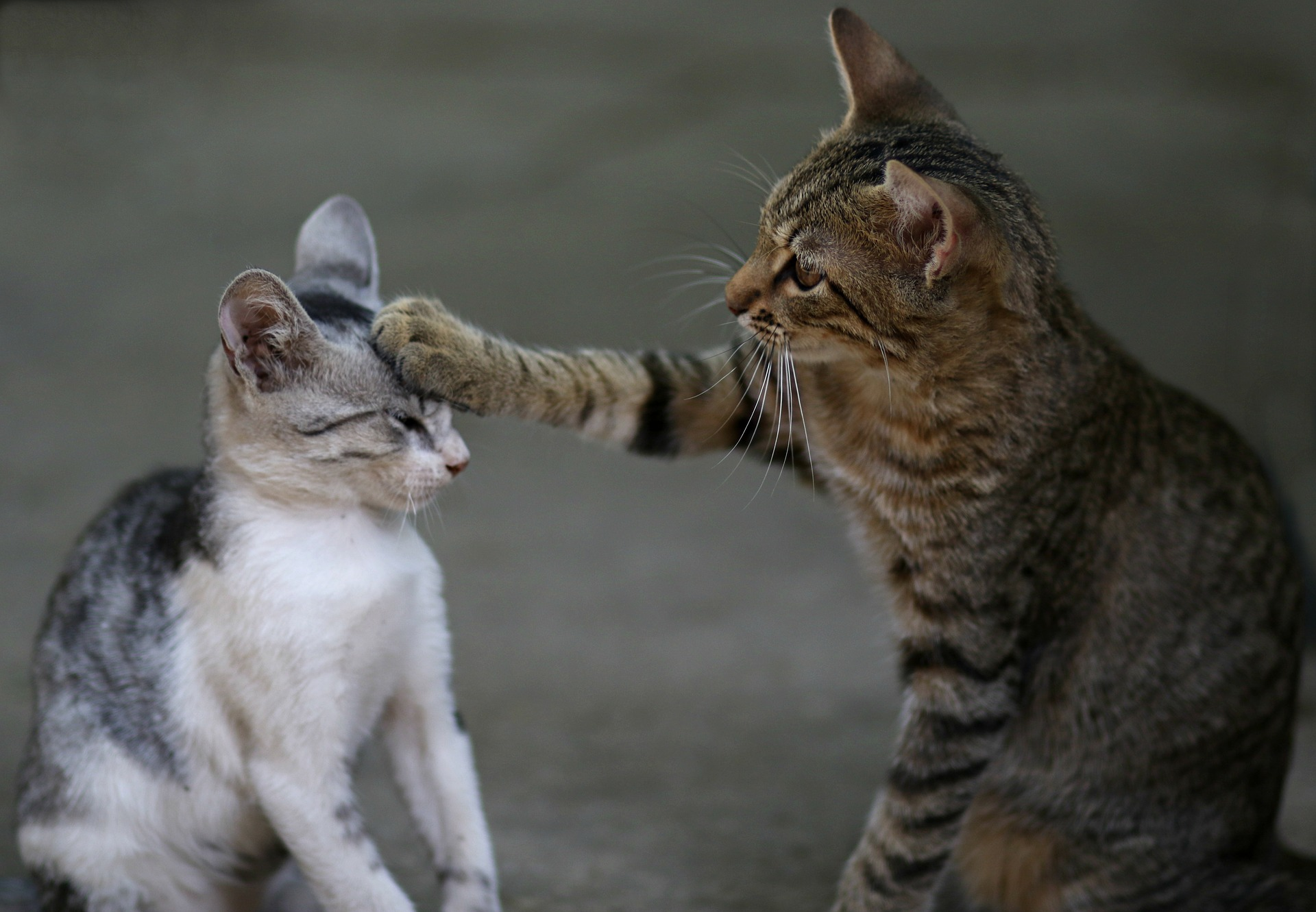 Sudden aggression between cats: tips from A Cat Clinic, Germantown, MD
