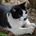 Cat Scratching Furniture: tips from A Cat Clinic, Germantown, MD