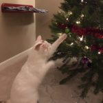 Holiday gifts for cats from A Cat Clinic, Germantown, MD