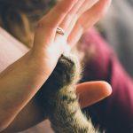A Cat Clinic memorial contributions to Winn Feline Foundation