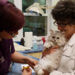 Dr. Dale Rubenstein retired from A Cat Clinic